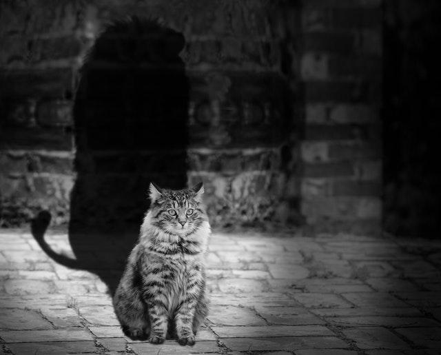 A Sombra, o Sucesso e a Individuação Psicologia Analítica